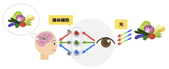 【図7】色の見える仕組み